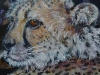 Gepardportræt 20x20
