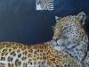 Leopard på udkig! 50x50